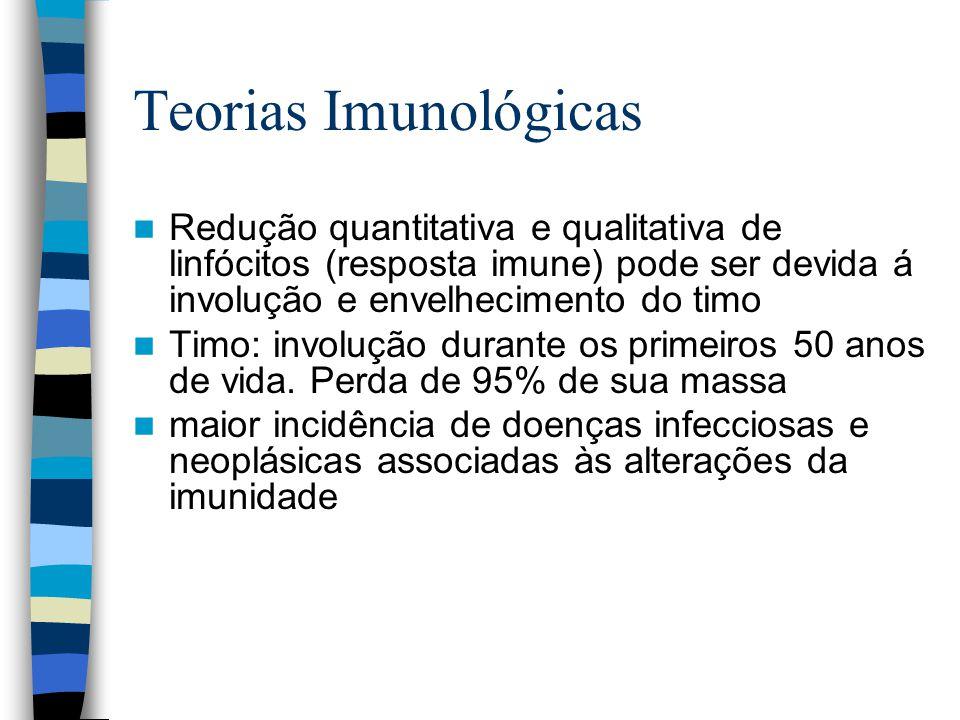 Teorias Imunológicas Redução quantitativa e qualitativa de linfócitos (resposta imune) pode ser devida á involução e envelhecimento do timo Timo: involução durante os primeiros 50 anos de vida.
