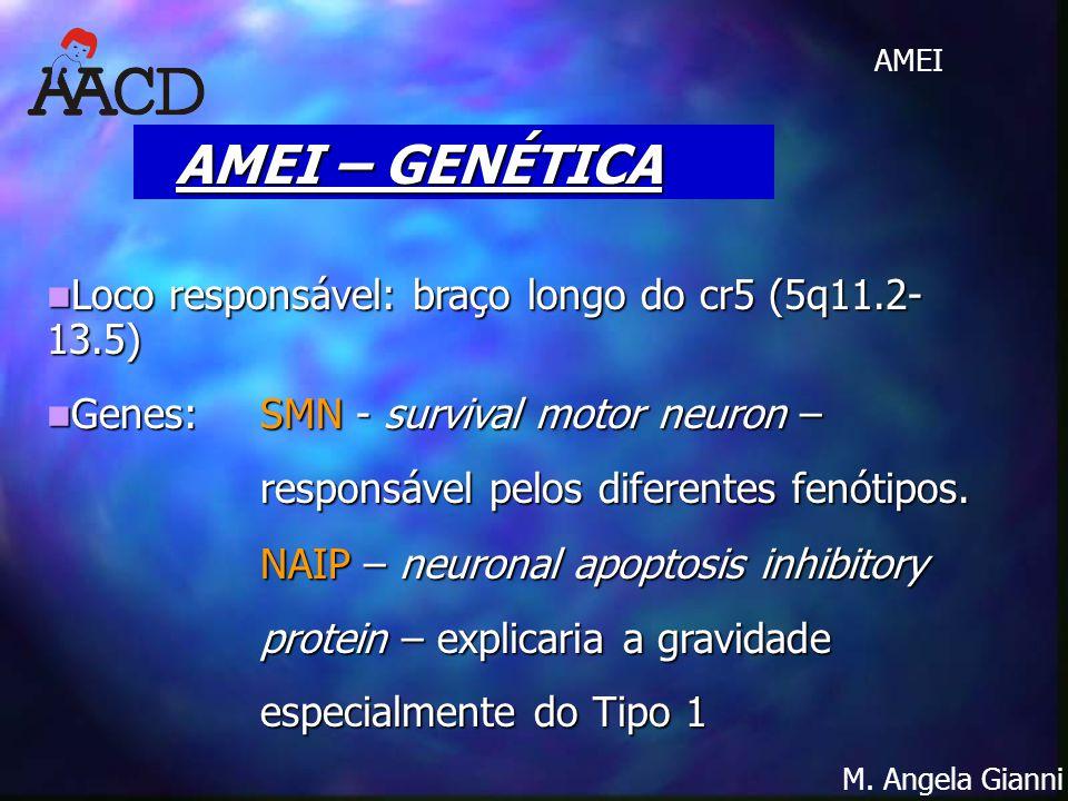 M. Angela Gianni AMEI Loco responsável: braço longo do cr5 (5q11.2- 13.5) Loco responsável: braço longo do cr5 (5q11.2- 13.5) Genes:SMN - survival mot