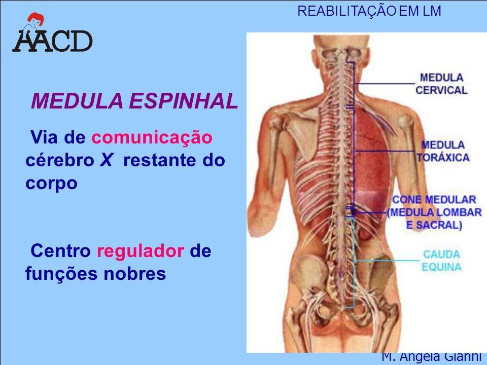 REABILITAÇÃO EM LM M. Angela Gianni MEDULA ESPINHAL Via de comunicação cérebro X restante do corpo Centro regulador de funções nobres
