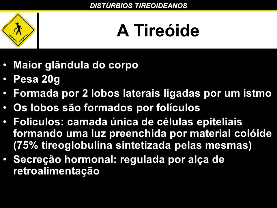 DISTÚRBIOS TIREOIDEANOS Anatomia