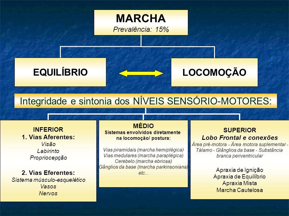 MARCHA Prevalência: 15% EQUILÍBRIO LOCOMOÇÃO Integridade e sintonia dos NÍVEIS SENSÓRIO-MOTORES: INFERIOR 1.