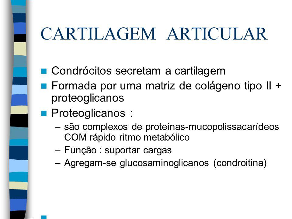CARTILAGEM ARTICULAR Condrócitos secretam a cartilagem Formada por uma matriz de colágeno tipo II + proteoglicanos Proteoglicanos : –são complexos de