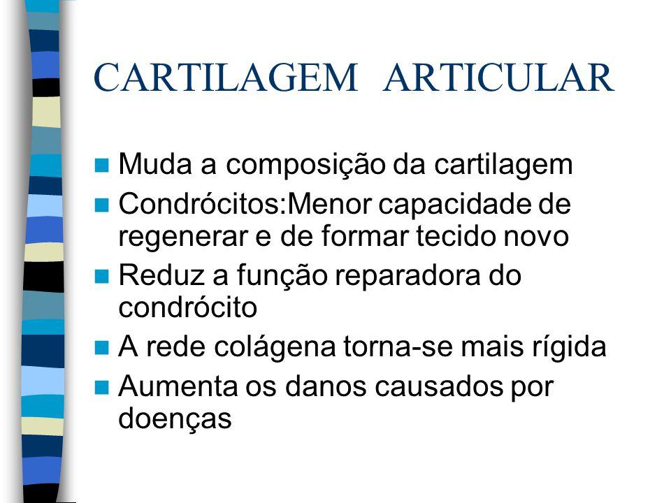 CARTILAGEM ARTICULAR Muda a composição da cartilagem Condrócitos:Menor capacidade de regenerar e de formar tecido novo Reduz a função reparadora do co