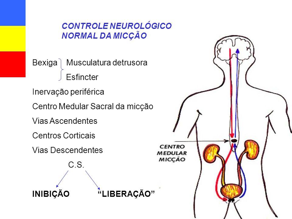 Bexiga Musculatura detrusora Esfincter Inervação periférica Centro Medular Sacral da micção Vias Ascendentes Centros Corticais Vias Descendentes C.S.