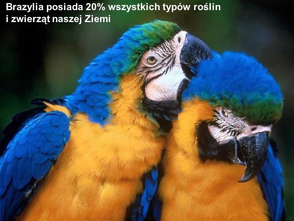 Brazylia posiada 20% wszystkich typów roślin i zwierząt naszej Ziemi