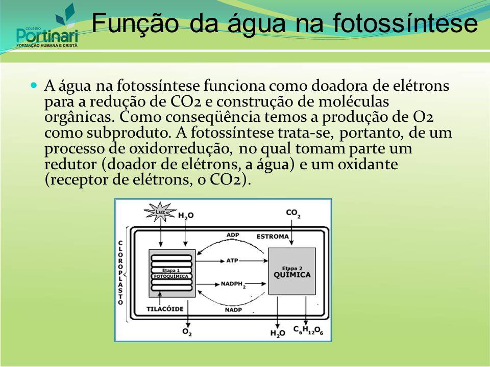 Função da água na fotossíntese A água na fotossíntese funciona como doadora de elétrons para a redução de CO2 e construção de moléculas orgânicas. Com