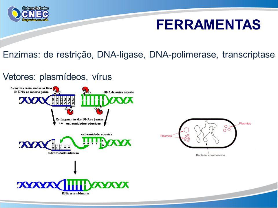 FERRAMENTAS Enzimas: de restrição, DNA-ligase, DNA-polimerase, transcriptase Vetores: plasmídeos, vírus