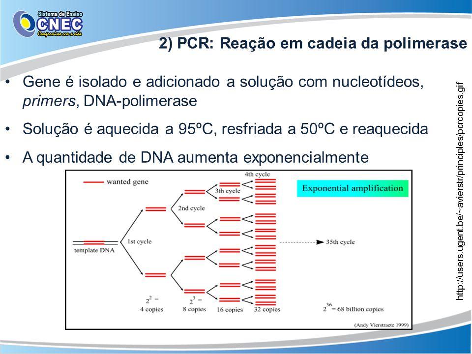 2) PCR: Reação em cadeia da polimerase Gene é isolado e adicionado a solução com nucleotídeos, primers, DNA-polimerase Solução é aquecida a 95ºC, resf