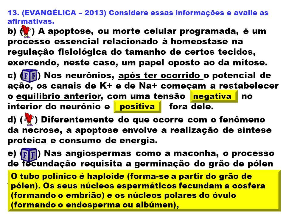 13. (EVANGÉLICA – 2013) Considere essas informações e avalie as afirmativas. b) ( ) A apoptose, ou morte celular programada, é um processo essencial r