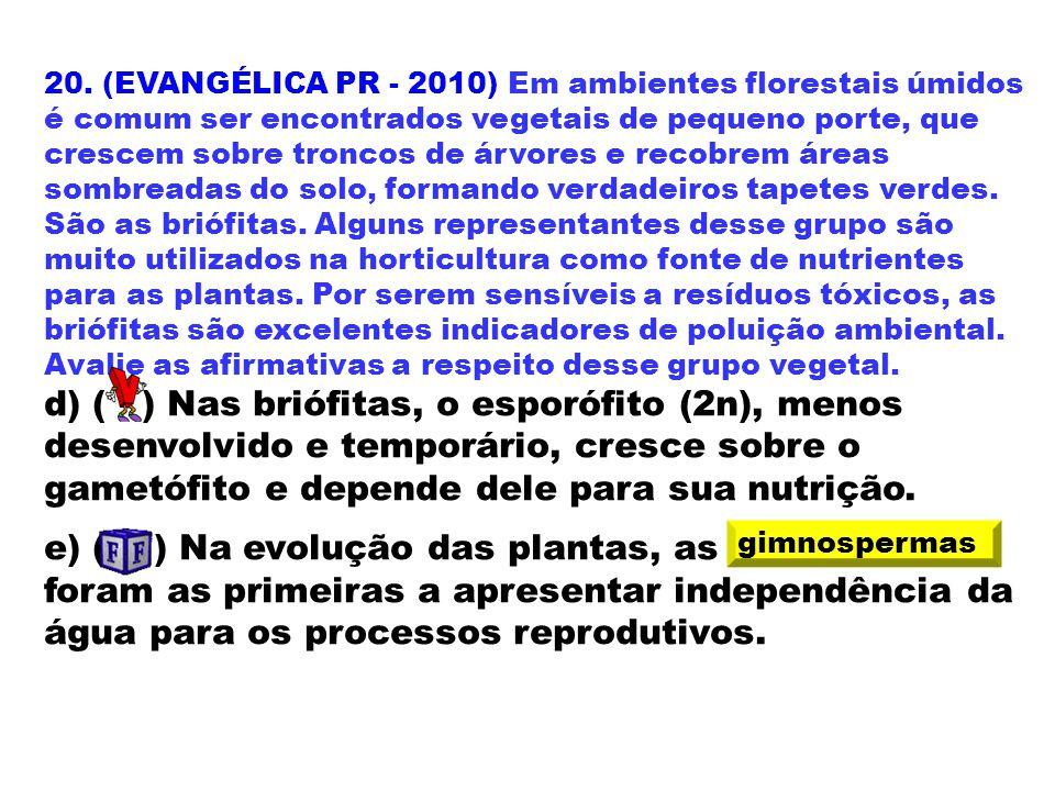 20. (EVANGÉLICA PR - 2010) Em ambientes florestais úmidos é comum ser encontrados vegetais de pequeno porte, que crescem sobre troncos de árvores e re