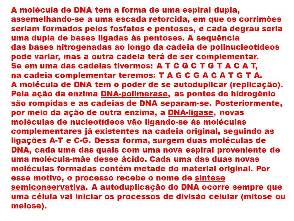 A molécula de DNA tem a forma de uma espiral dupla, assemelhando-se a uma escada retorcida, em que os corrimões seriam formados pelos fosfatos e pento