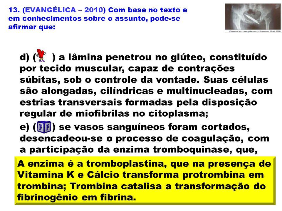 13. (EVANGÉLICA – 2010) Com base no texto e em conhecimentos sobre o assunto, pode-se afirmar que: d) ( ) a lâmina penetrou no glúteo, constituído por