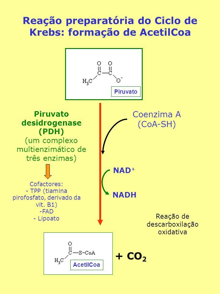 AcetilCoa Piruvato Reação preparatória do Ciclo de Krebs: formação de AcetilCoa Piruvato desidrogenase (PDH) (um complexo multienzimático de três enzimas) Coenzima A (CoA-SH) + CO 2 NAD + NADH Reação de descarboxilação oxidativa Cofactores: - TPP (tiamina pirofosfato, derivado da vit.