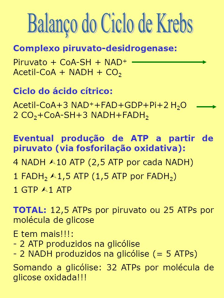 Complexo piruvato-desidrogenase: Piruvato + CoA-SH + NAD + Acetil-CoA + NADH + CO 2 Ciclo do ácido cítrico: Acetil-CoA+3 NAD + +FAD+GDP+Pi+2 H 2 O 2 CO 2 +CoA-SH+3 NADH+FADH 2 Eventual produção de ATP a partir de piruvato (via fosforilação oxidativa): 4 NADH  10 ATP (2,5 ATP por cada NADH) 1 FADH 2  1,5 ATP (1,5 ATP por FADH 2 ) 1 GTP  1 ATP TOTAL: 12,5 ATPs por piruvato ou 25 ATPs por molécula de glicose E tem mais!!!: - 2 ATP produzidos na glicólise - 2 NADH produzidos na glicólise (= 5 ATPs) Somando a glicólise: 32 ATPs por molécula de glicose oxidada!!!