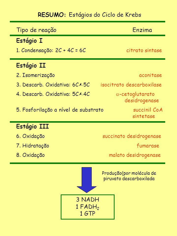 RESUMO: Estágios do Ciclo de Krebs Tipo de reação Enzima Estágio I 1. Condensação: 2C + 4C = 6C citrato sintase Estágio II 2. Isomerização aconitase 3