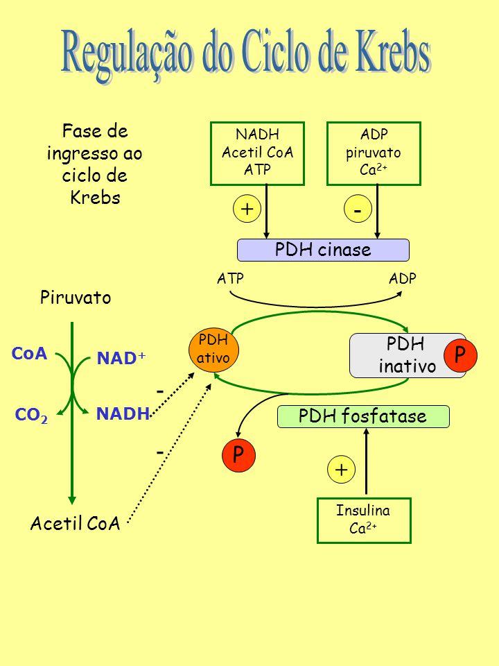Oxalo- acetato Citrato MalatoIsocitrato  -ceto- glutarato Fumarato Succinato Succinil- CoA (-) ATP (-) NADH (-) Succinil CoA (-) ATP (-) NADH (+) ADP (+) Ca 2+ (-) ATP (-) NADH (-) Succinil CoA (+) Ca 2+ Importante: Um alto valor da relação [ATP]/ [ADP] ou da relação [NADH]/ [NAD + ] INIBE o ciclo de Krebs