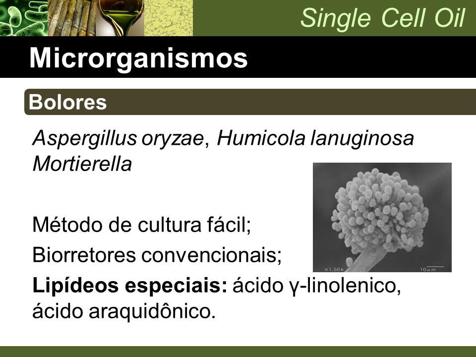 Single Cell Oil Microrganismos Aspergillus oryzae, Humicola lanuginosa Mortierella Método de cultura fácil; Biorretores convencionais; Lipídeos especi