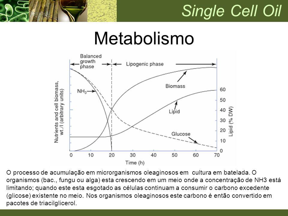 O processo de acumulação em microrganismos oleaginosos em cultura em batelada. O organismos (bac., fungu ou alga) esta crescendo em um meio onde a con