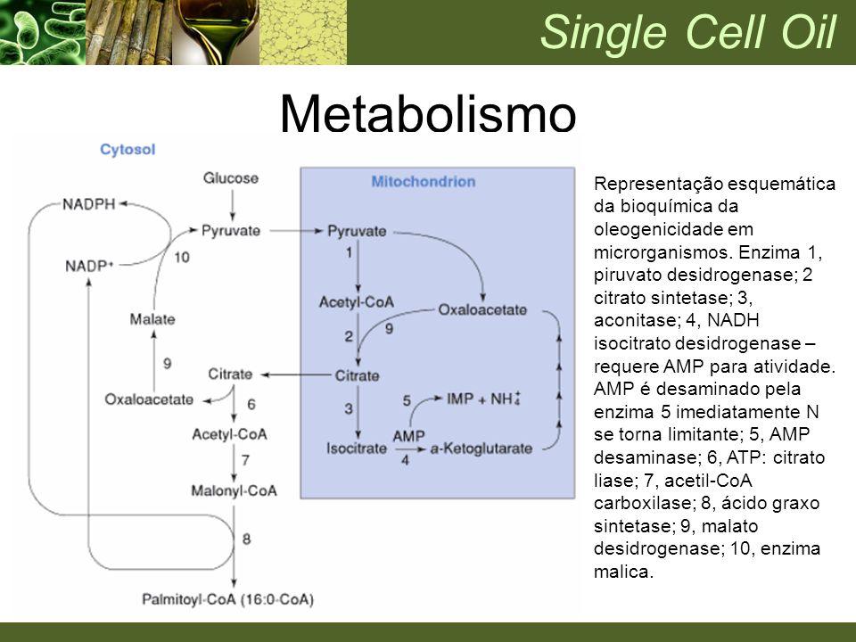 Representação esquemática da bioquímica da oleogenicidade em microrganismos. Enzima 1, piruvato desidrogenase; 2 citrato sintetase; 3, aconitase; 4, N