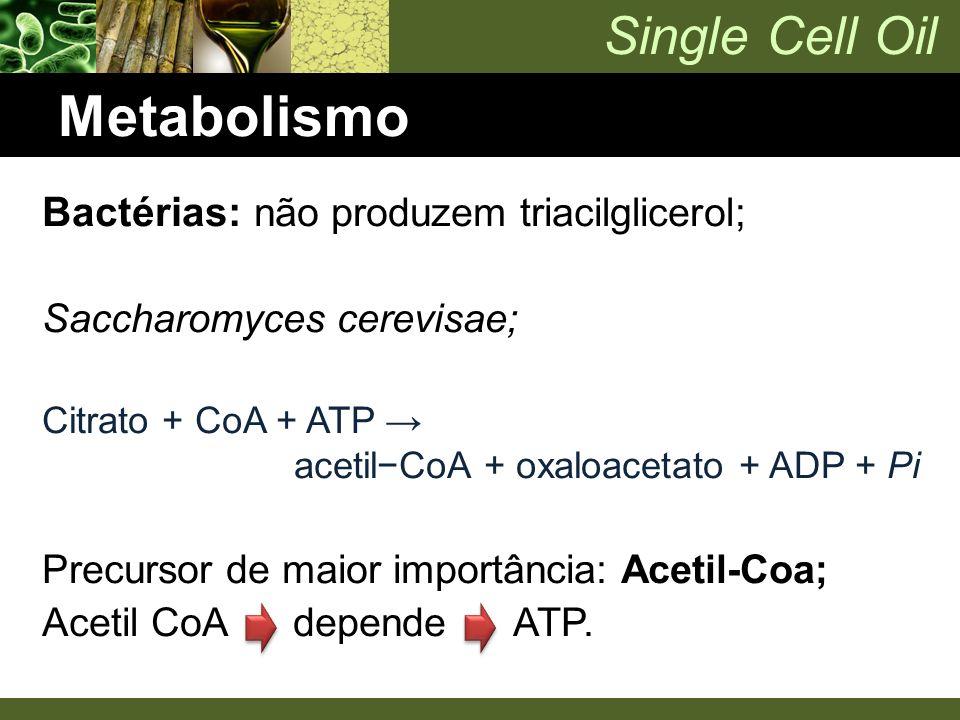 Metabolismo Bactérias: não produzem triacilglicerol; Saccharomyces cerevisae; Citrato + CoA + ATP → acetil−CoA + oxaloacetato + ADP + Pi Precursor de