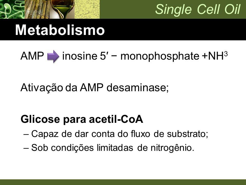 Single Cell Oil Metabolismo AMP inosine 5′ − monophosphate +NH 3 Ativação da AMP desaminase; Glicose para acetil-CoA –Capaz de dar conta do fluxo de s