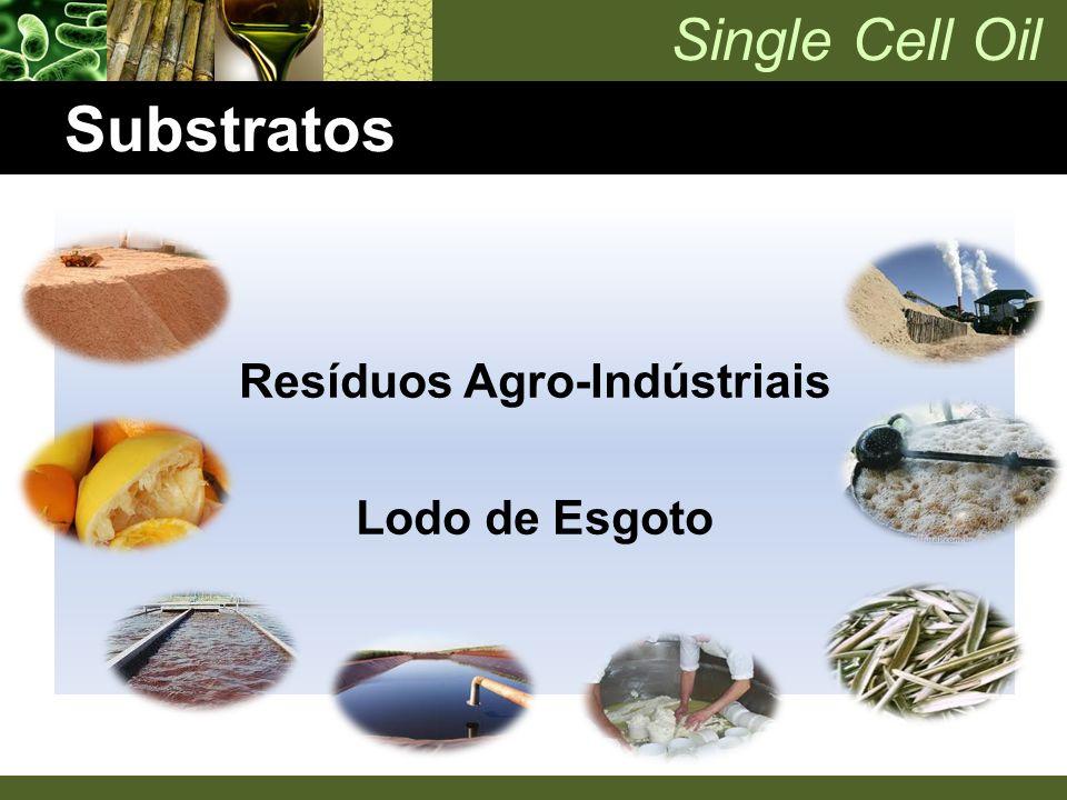 Single Cell Oil Substratos Resíduos Agro-Indústriais Lodo de Esgoto
