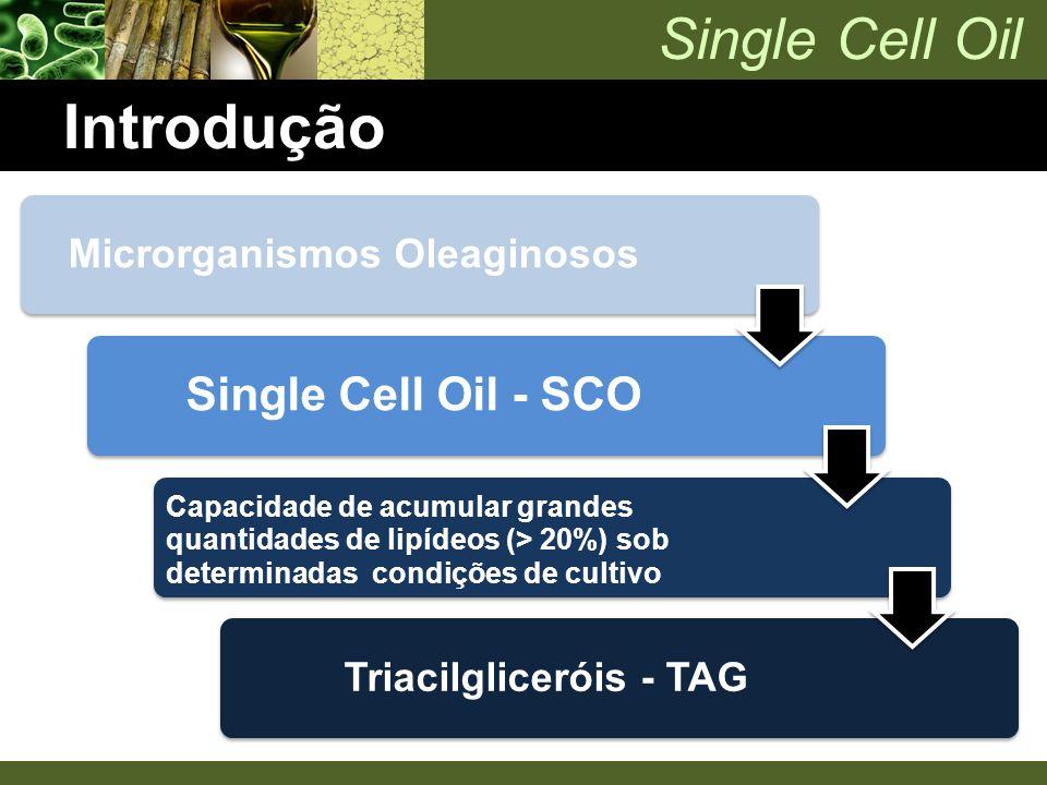 Single Cell Oil Introdução Microrganismos Oleaginosos Single Cell Oil - SCO Capacidade de acumular grandes quantidades de lipídeos (> 20%) sob determi