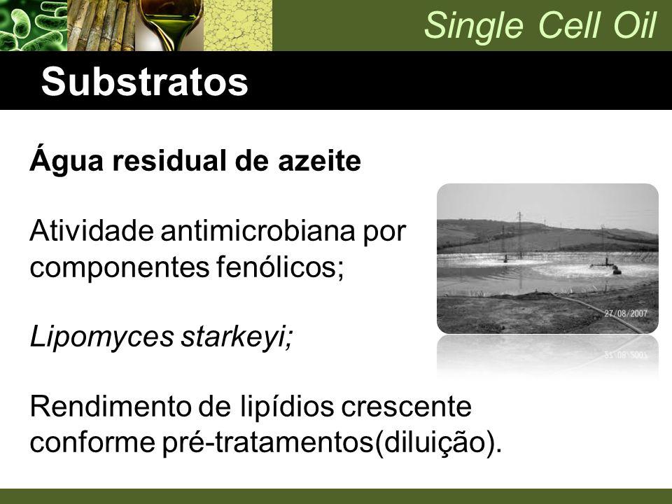 Single Cell Oil Substratos Água residual de azeite Atividade antimicrobiana por componentes fenólicos; Lipomyces starkeyi; Rendimento de lipídios cres