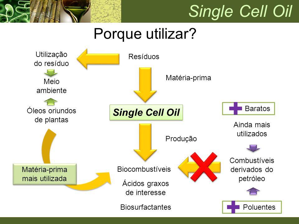 Poluentes Baratos Resíduos Single Cell Oil Matéria-prima Biocombustíveis Produção Ácidos graxos de interesse Óleos oriundos de plantas Combustíveis de