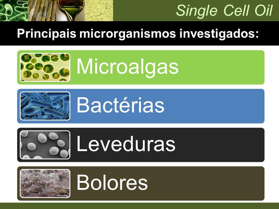 Single Cell Oil Principais microrganismos investigados: Microalgas Bactérias Leveduras Bolores