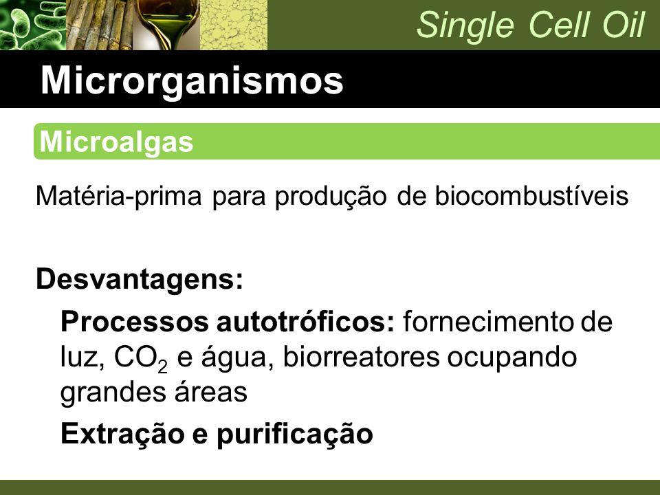 Single Cell Oil Microrganismos Matéria-prima para produção de biocombustíveis Desvantagens: Processos autotróficos: fornecimento de luz, CO 2 e água,