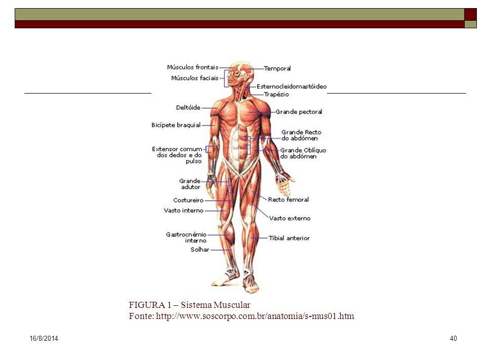 16/8/201440 FIGURA 1 – Sistema Muscular Fonte: http://www.soscorpo.com.br/anatomia/s-mus01.htm