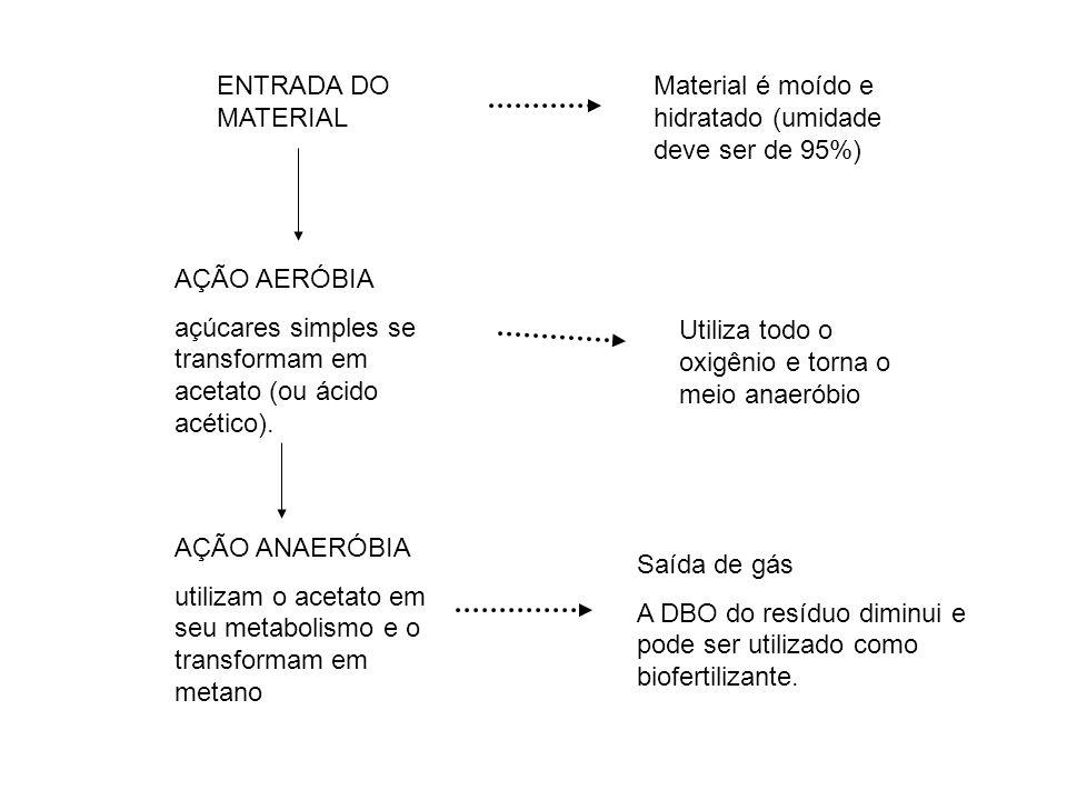 ENTRADA DO MATERIAL AÇÃO AERÓBIA açúcares simples se transformam em acetato (ou ácido acético).