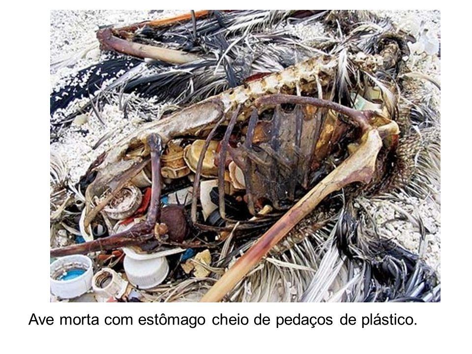 Ave morta com estômago cheio de pedaços de plástico..