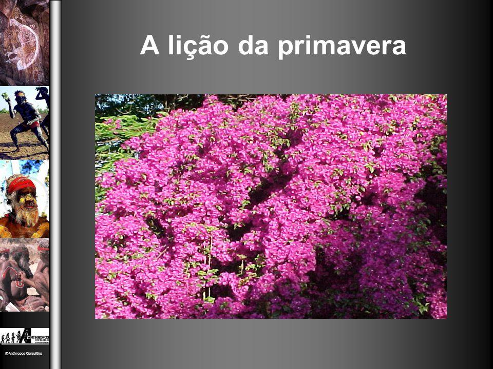 ©Anthropos Consulting A lição da primavera