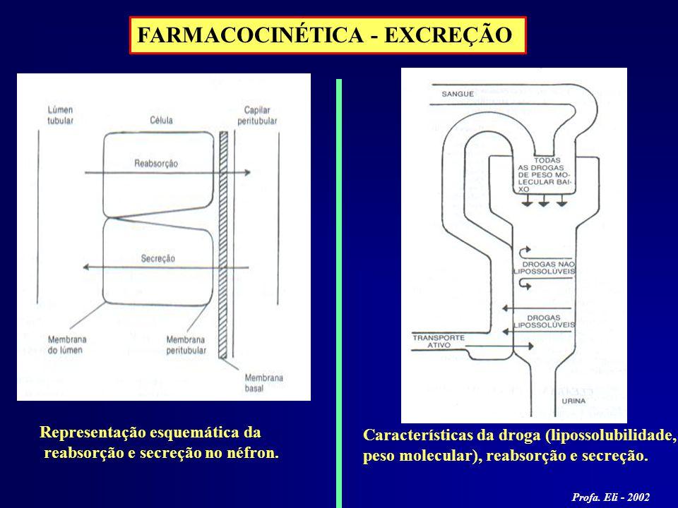 FARMACOCINÉTICA - EXCREÇÃO Representação esquemática da reabsorção e secreção no néfron. Características da droga (lipossolubilidade, peso molecular),