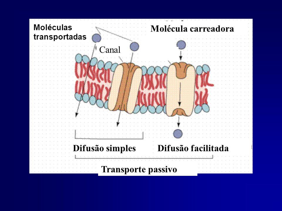 Moléculas transportadas Difusão simplesDifusão facilitada Transporte passivo Canal Molécula carreadora