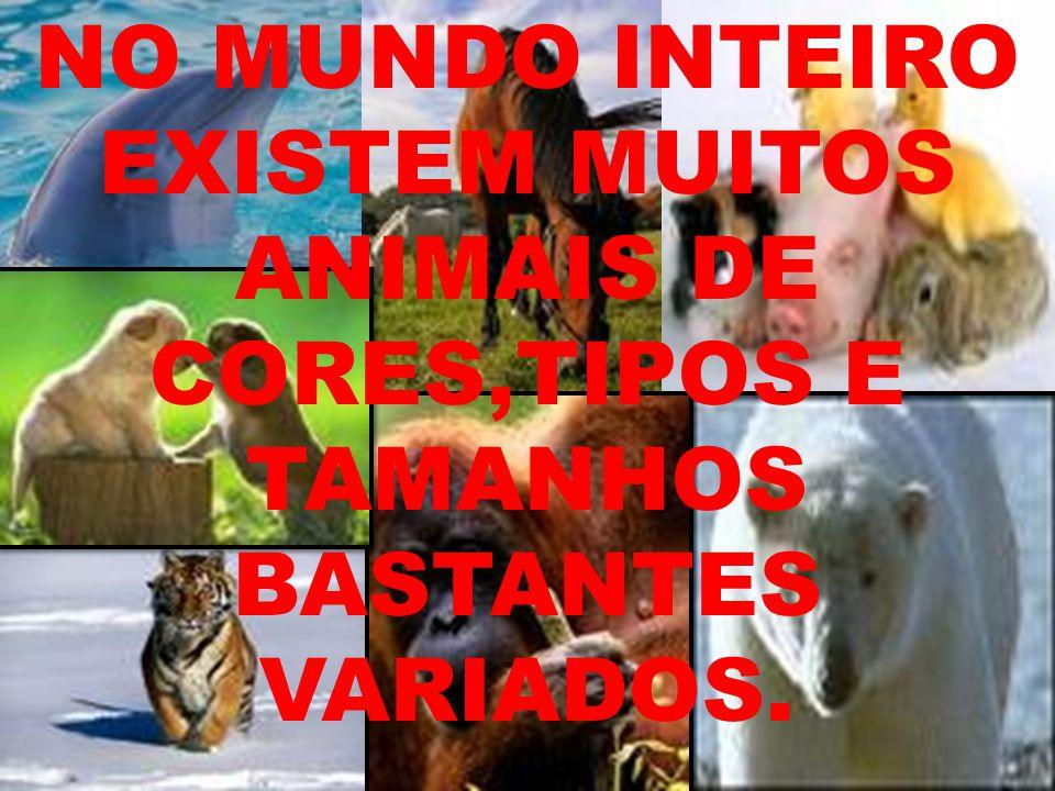 NO MUNDO INTEIRO EXISTEM MUITOS ANIMAIS DE CORES,TIPOS E TAMANHOS BASTANTES VARIADOS.