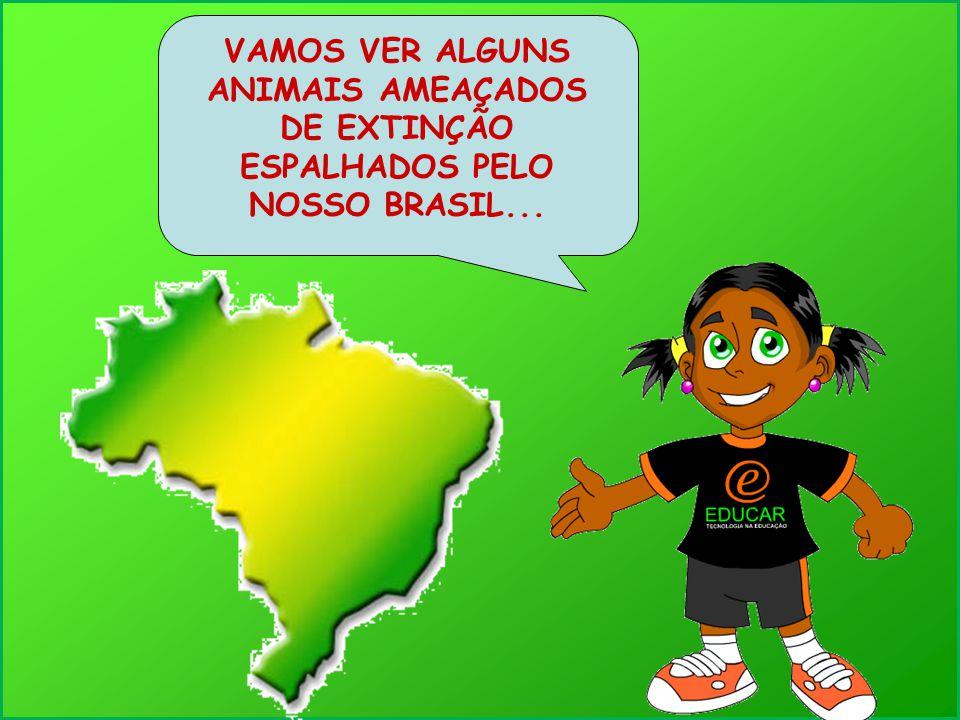 VAMOS VER ALGUNS ANIMAIS AMEAÇADOS DE EXTINÇÃO ESPALHADOS PELO NOSSO BRASIL...