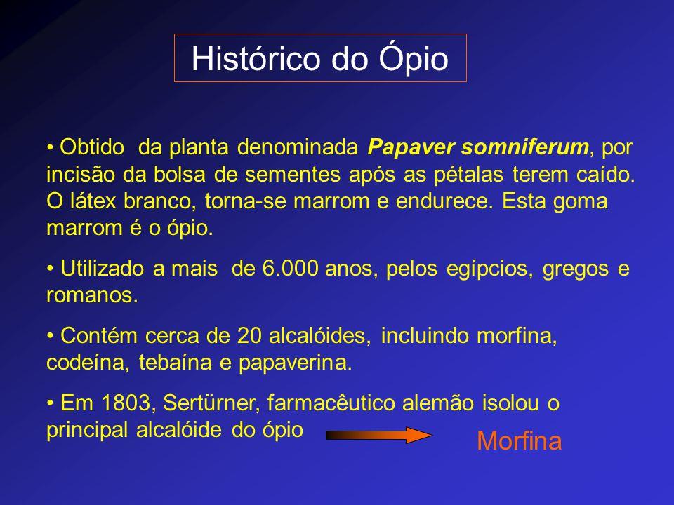 Histórico do Ópio Obtido da planta denominada Papaver somniferum, por incisão da bolsa de sementes após as pétalas terem caído. O látex branco, torna-
