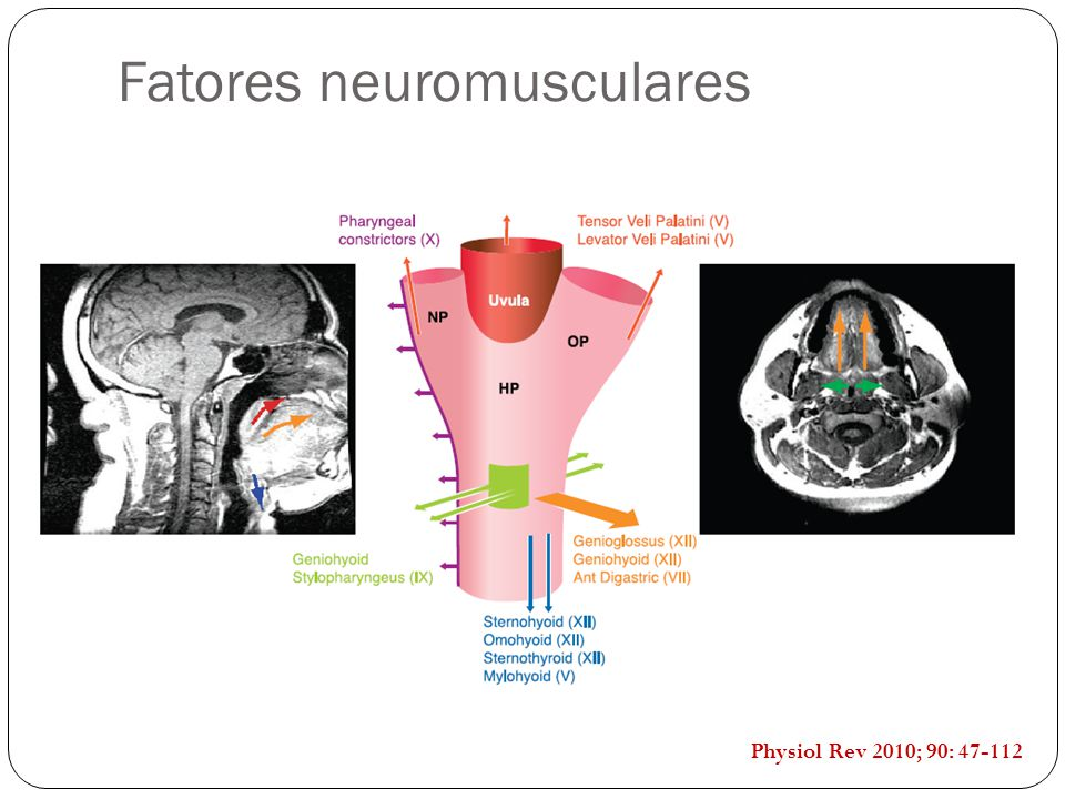 Fatores neuromusculares Physiol Rev 2010; 90: 47-112
