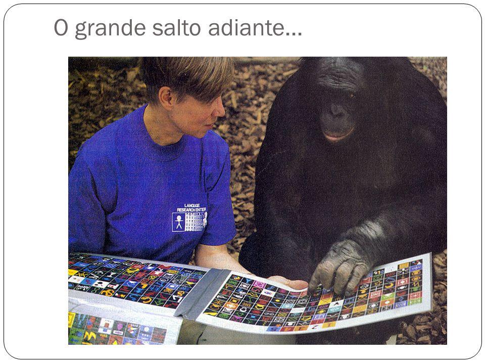 J Anat 2008; 212: 455-468 Sleep Med 2003; 4: 185-94 Homo sapiens Pan troglodytes
