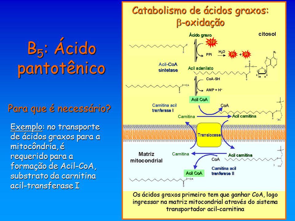 B 5 : Ácido pantotênico Para que é necessário? Catabolismo de ácidos graxos:  -oxidação Exemplo: no transporte de ácidos graxos para a mitocôndria, é
