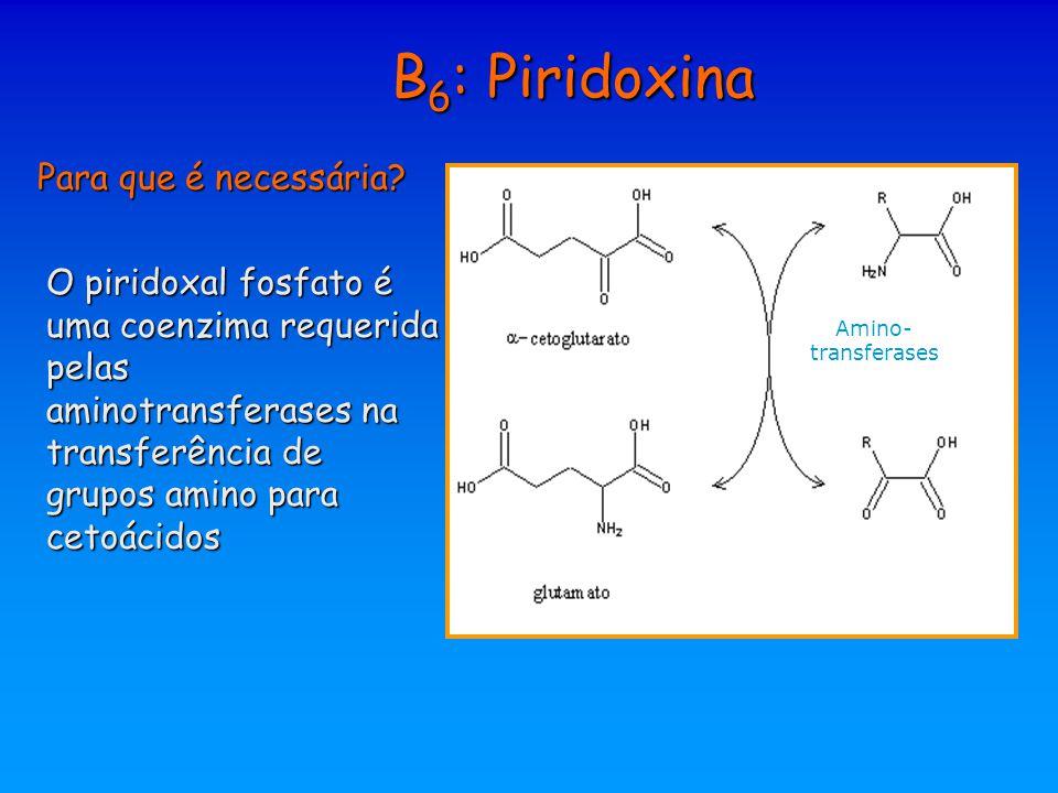 B 6 : Piridoxina Para que é necessária? O piridoxal fosfato é uma coenzima requerida pelas aminotransferases na transferência de grupos amino para cet
