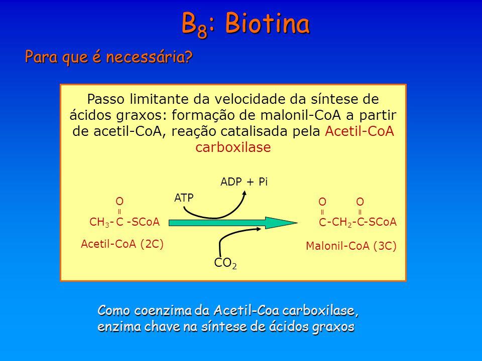 B 8 : Biotina Para que é necessária? Passo limitante da velocidade da síntese de ácidos graxos: formação de malonil-CoA a partir de acetil-CoA, reação