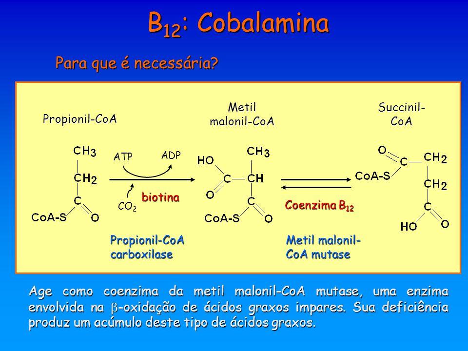 B 12 : Cobalamina Para que é necessária? ATP ADP CO 2 biotina Propionil-CoA carboxilase Propionil-CoA Metil malonil-CoA Succinil- CoA Coenzima B 12 Me
