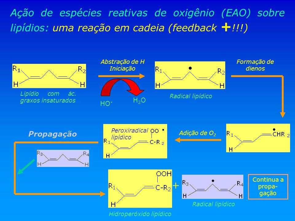Ação de espécies reativas de oxigênio (EAO) sobre lipídios: uma reação em cadeia (feedback + !!!) Lipídio com ác. graxos insaturados HO. Radical lipíd