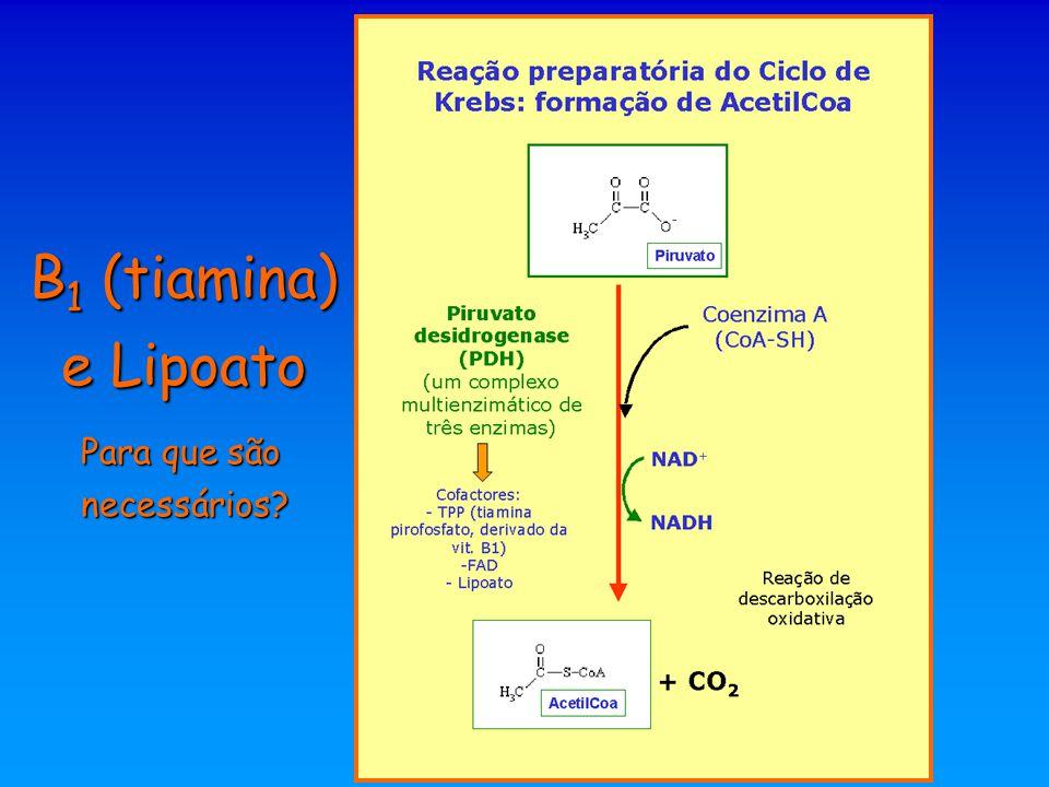  -cetoglutarato Succinil-CoA Exemplo: no ciclo de Krebs são cofactores do complexo da  -cetoglutarato desidrogenase na oxidação do  -cetoglutarato a succinil-CoA  -cetoglutarato desidrogenase (um complexo de três enzimas) B 1 (tiamina) e Lipoato Para que são necessários.
