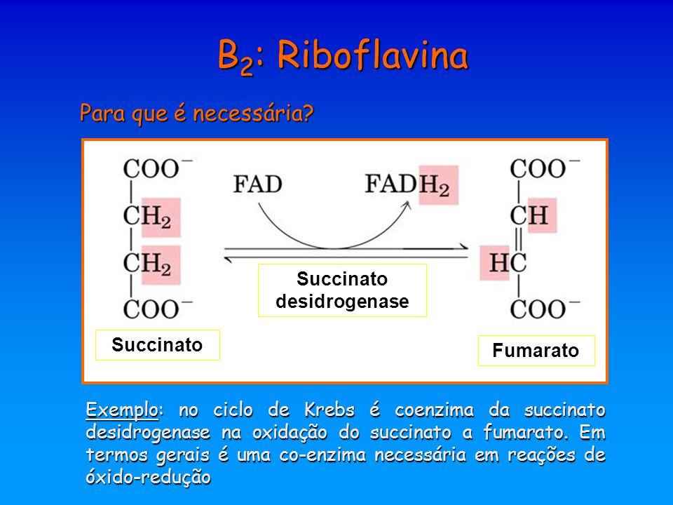 B 2 : Riboflavina Para que é necessária? Succinato desidrogenase Fumarato Exemplo: no ciclo de Krebs é coenzima da succinato desidrogenase na oxidação