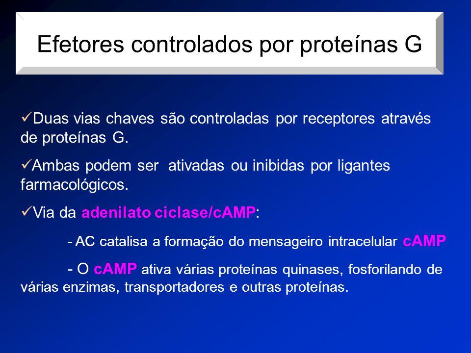 Efetores controlados por proteínas G Duas vias chaves são controladas por receptores através de proteínas G. Ambas podem ser ativadas ou inibidas por